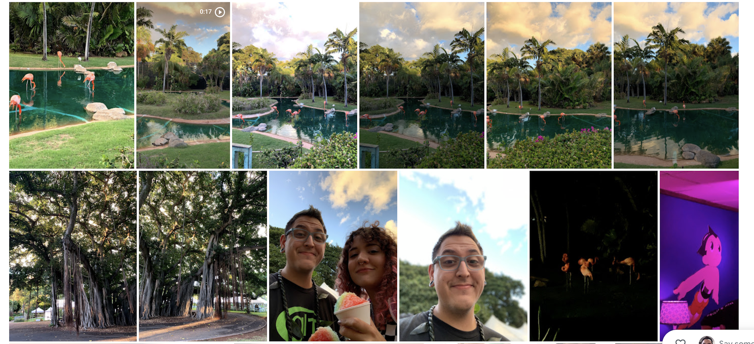 A grid featuring photos of flamingos in a reflective blue-green pool surrounded by nature and me and Thais Laney eating frozen ice